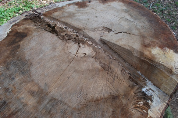 treestumptopview2013