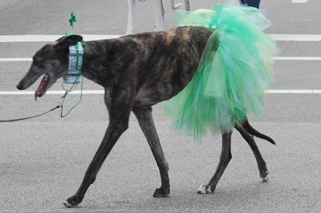 Greyhoundgreen2013
