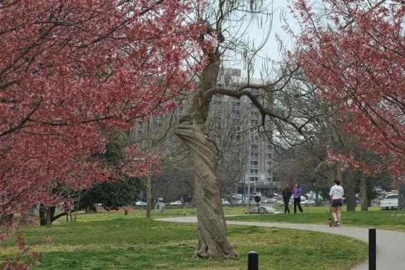 Springtreeswintertrees2013