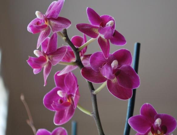Orchids2013