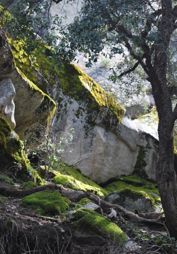 Yosemite_3