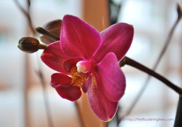 Orchidbloom_2014ft
