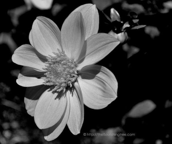 Shimmerinblackandwhite_2014_FT