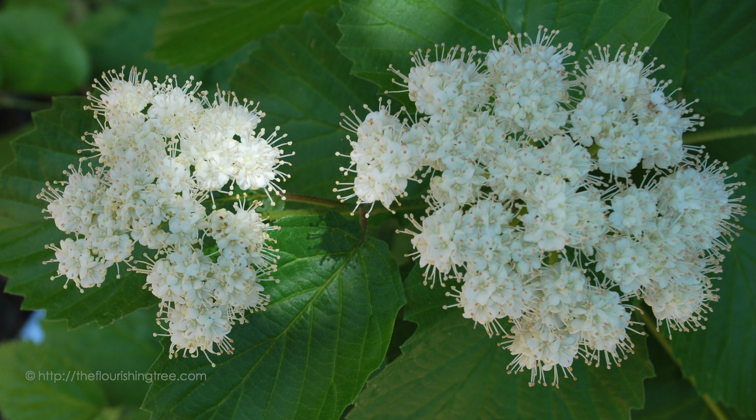 Texturedbloomsincolor_2014_FT