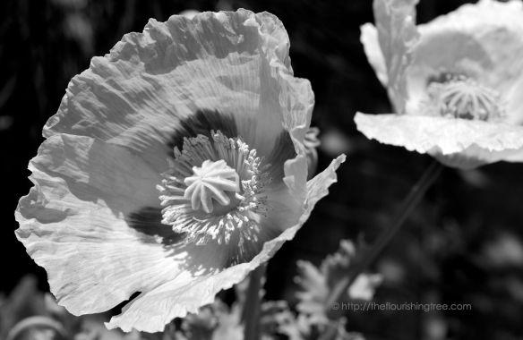 Uniqueflowercenterinblackandwhite_2014_FT