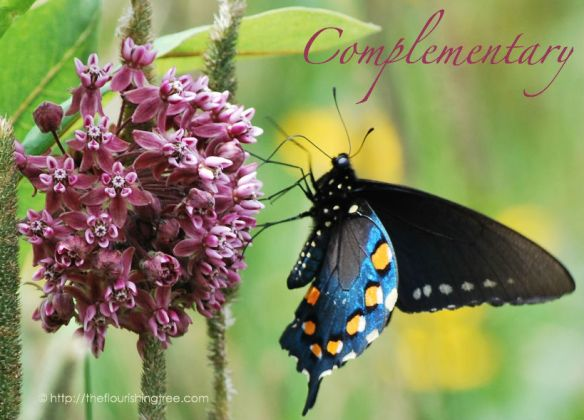 Complementarycolors2014_ft