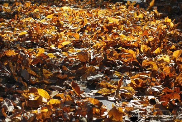FallLeaves2014_FT