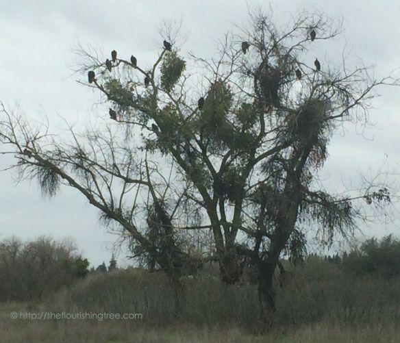 Vultures2014_FT