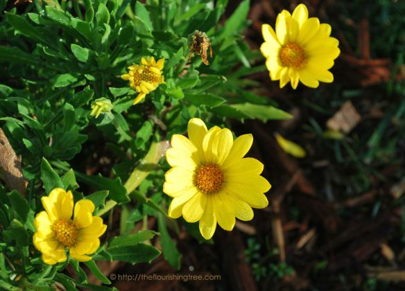 EarlyBloomsyellow2015_FT
