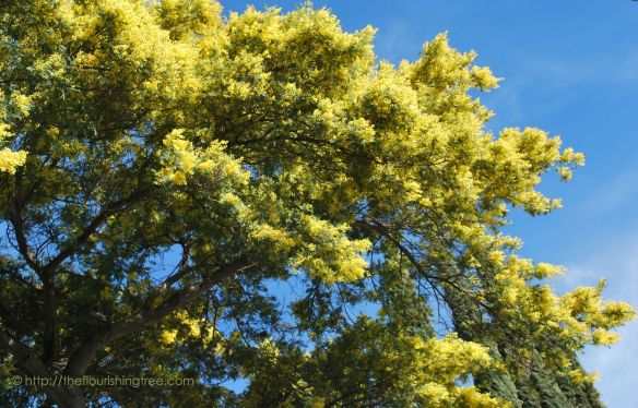 EarlySpringyellowtree2015_FT