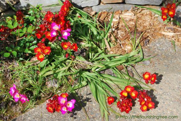 EasterGardenmysteryflower2015_FT