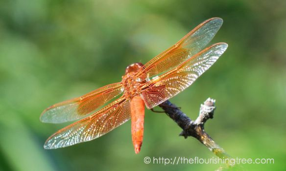 Dragonfly2015_1FT
