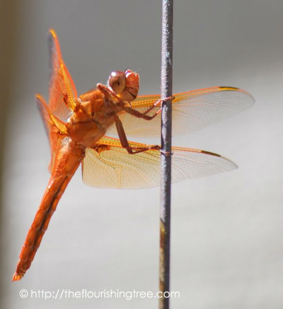 Dragonfly2015_2FT