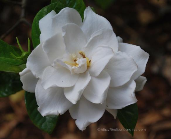 gardenia22015_FT