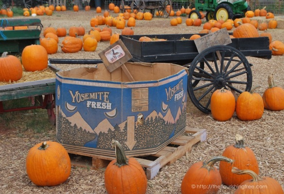 PumpkinFarm2015_1FT
