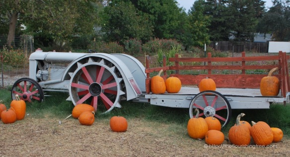 PumpkinFarm2015_2FT