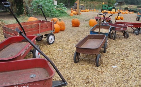 PumpkinFarm2015_6FT