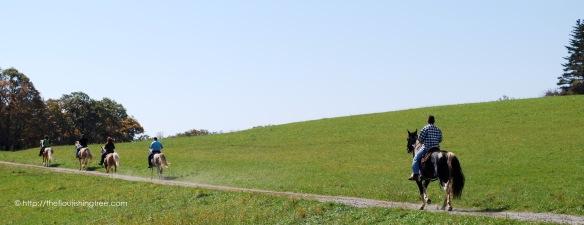 Horses2009_FT