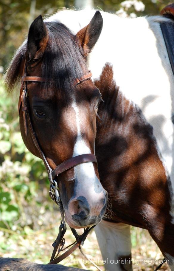 Horses2010_FT