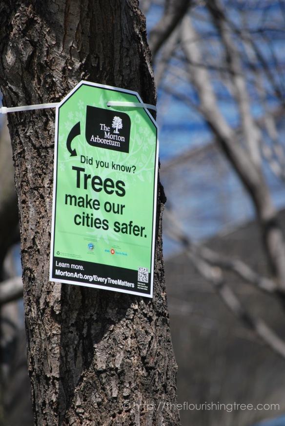 treesignsChicago_20132_FT