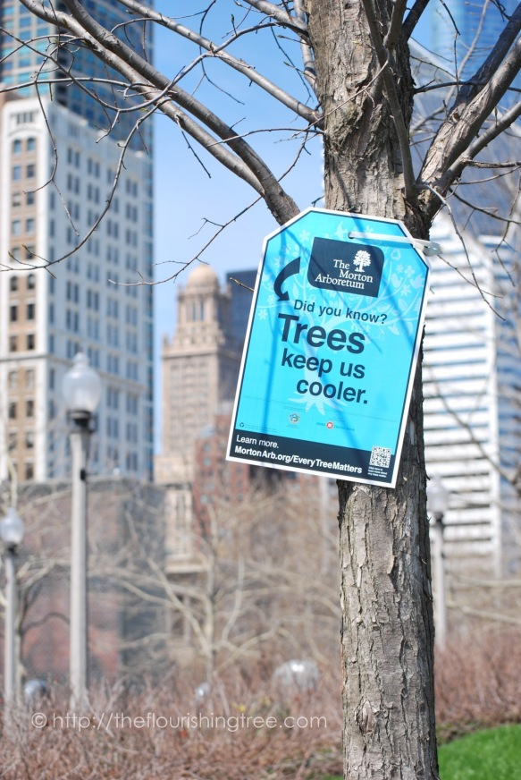 treesignsChicago_20134_FT