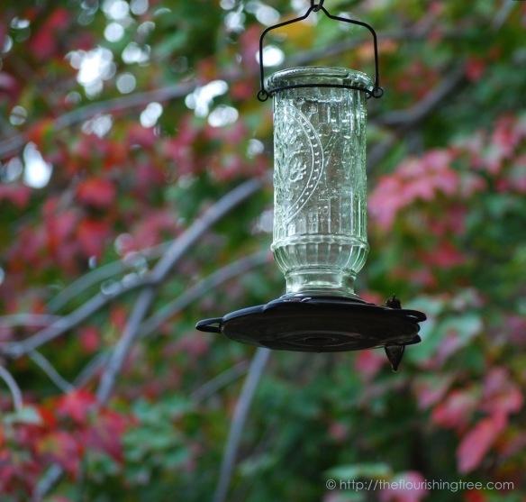 hummingbird2016_3ft