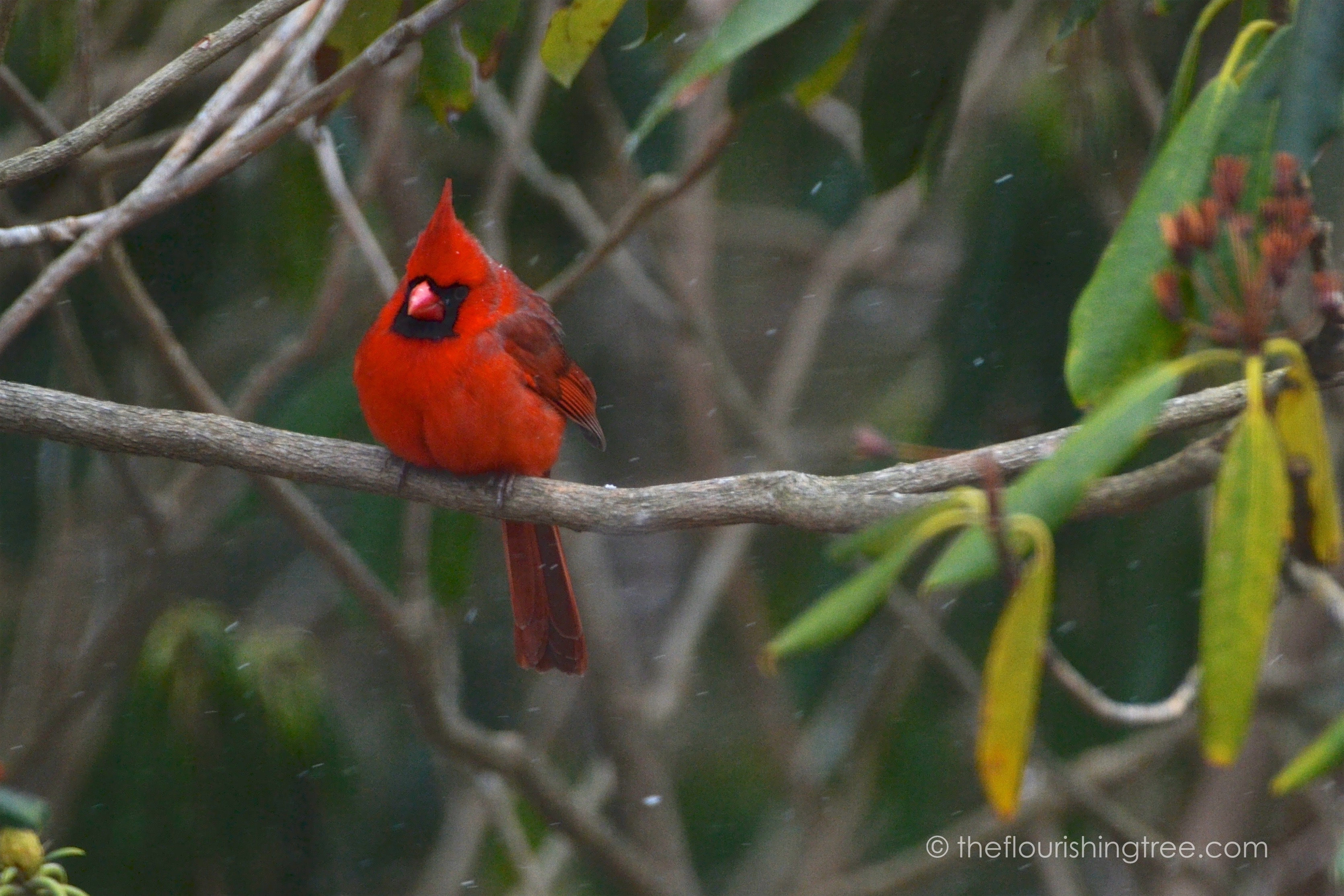 Cardinals2020_1FT