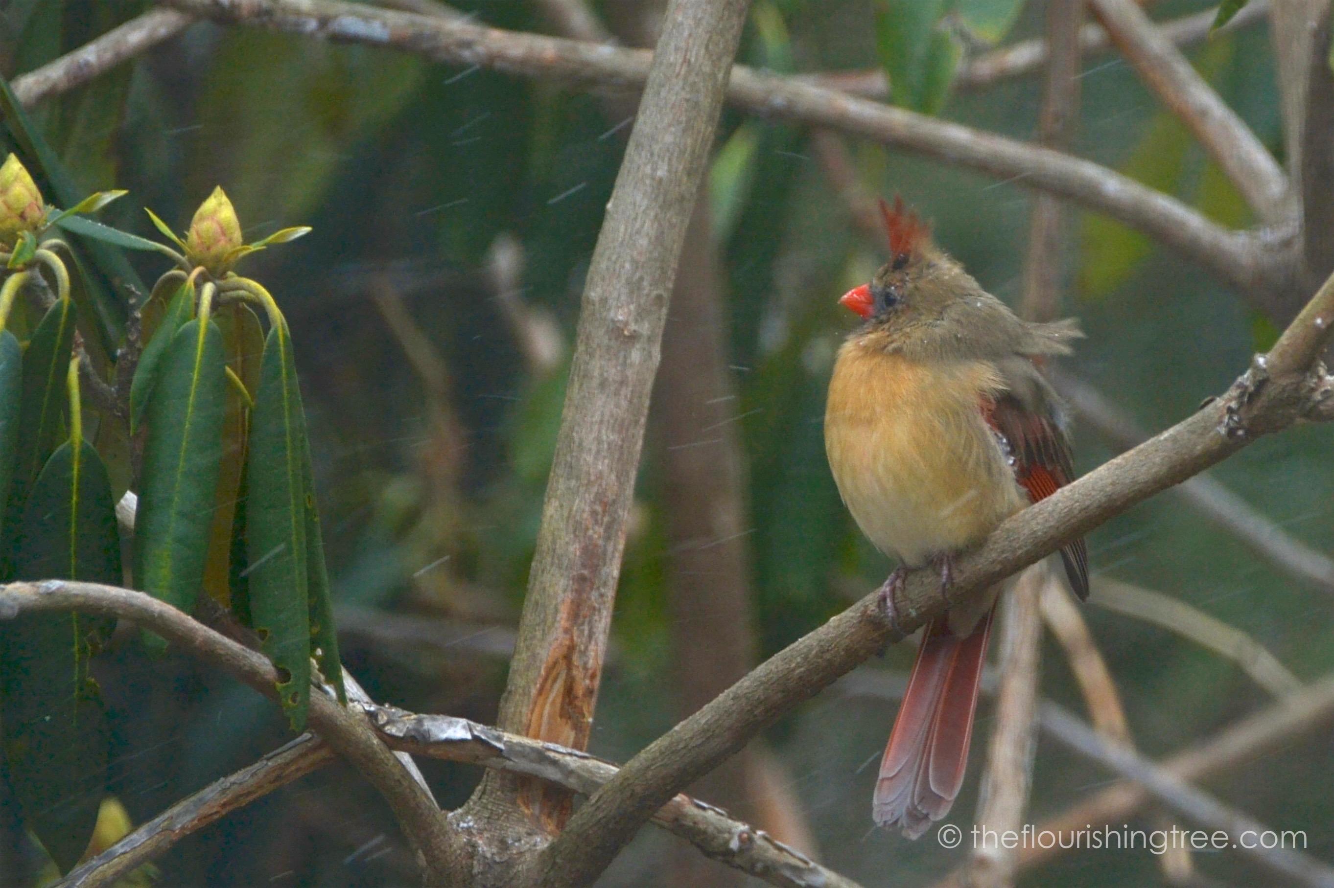 Cardinals2020_2FT
